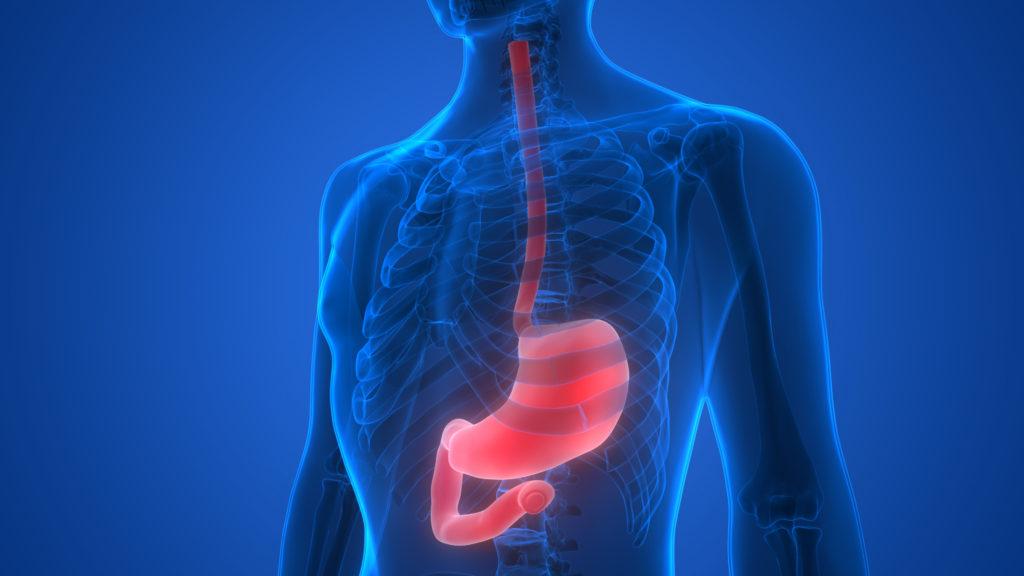 Magen: Die Funktion zu verstehen wird helfen